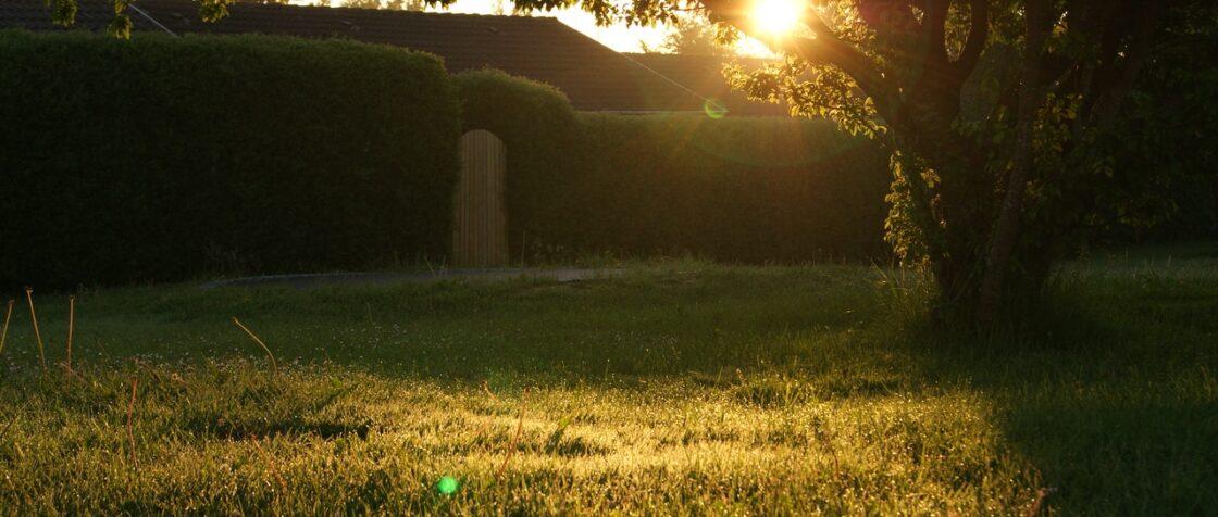 Solnedgang i baghave