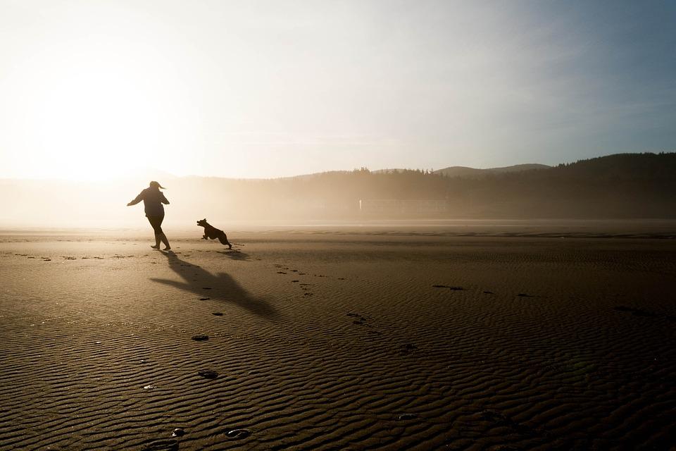 Hund løber efter ejer