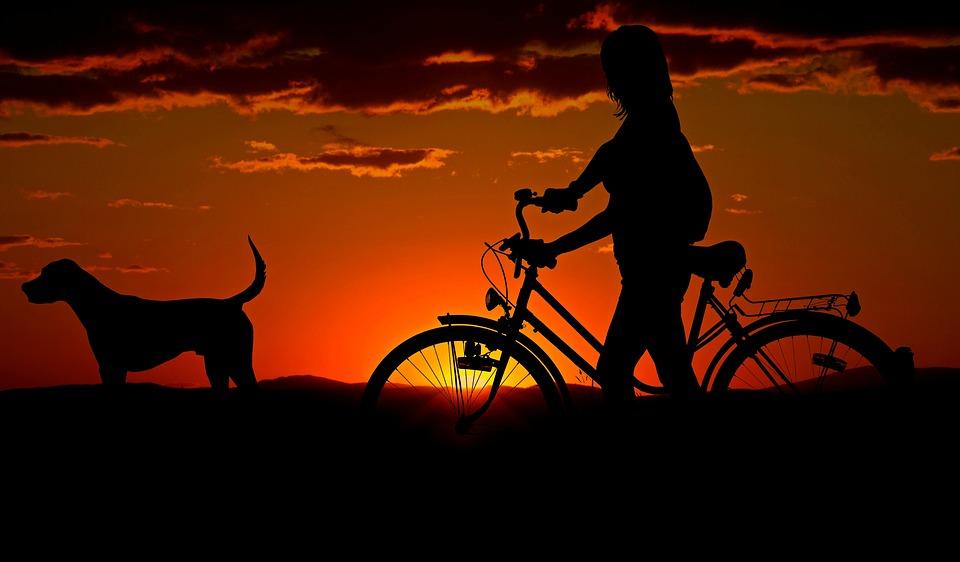 Hund og ejer i solnedgangen