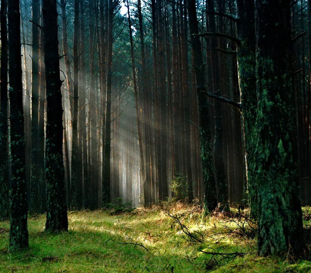 smuk skov